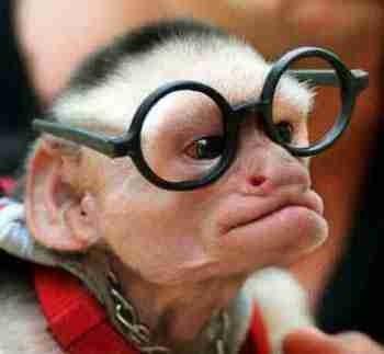 Monkey_nerd